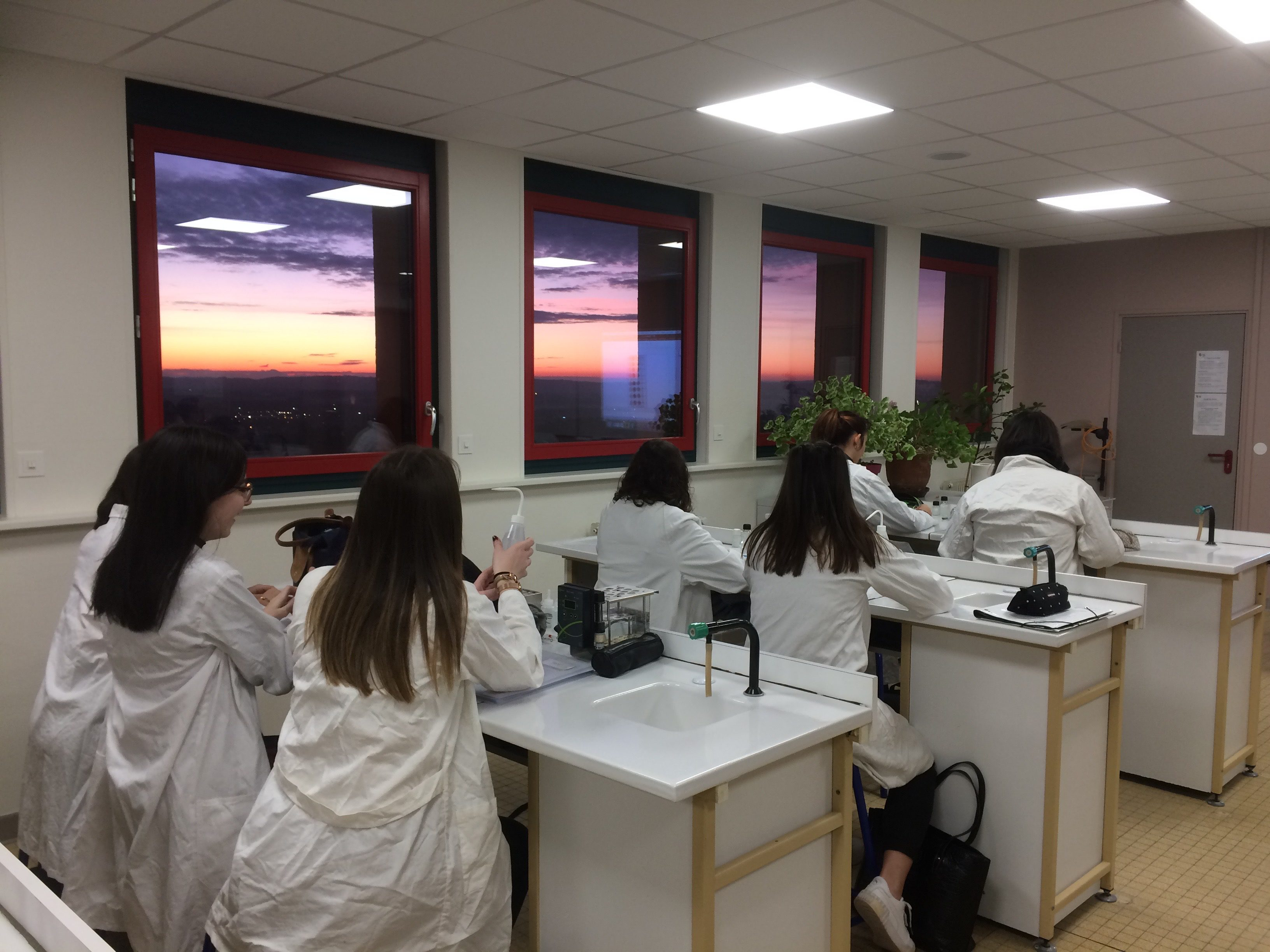 Des élèves au cours d'une activité expérimentale